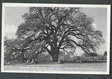 1956 RPPC* Mammoth Hooker Oak Tree Estimated 1,000 Year Old In Chicago IL Posted