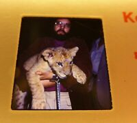 Stereo Realist 3D Lion Cub On Leash  Interesting  Vintage 1979 Kodak Cameracade