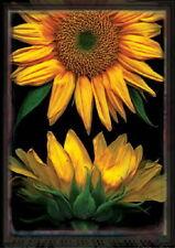 New listing New Large Toland House Flag Sunflowers On Black - Stunning! 28 X 40