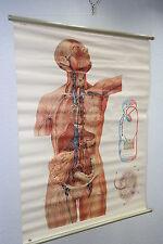 Vecchio grande Lavagna didattica vasi linfatici Insegnamento Parete Mappa ruolo