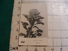 Vintage  POSTCARD: plant WARATAH N.S.W. ips real photo