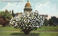 DB Prelinen Postcard A468 The State Capitol Sacramento California Garden Rieder