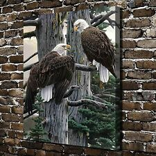 """Nesting Call Eagle HD Canvas Print 24""""x30"""" Home Decor painting Wall Art Pictures"""