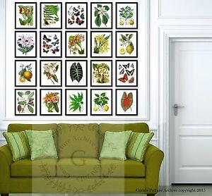 Botanical decor botanical art set of 20 Unframed Tropical living room decor