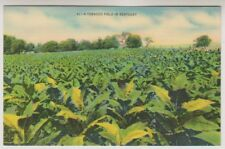 card - A Tobacco Field in Kentucky (A82)