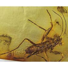 Bernstein Inkluse Inklusen Einschluss Insekt Gottesanbeterin Mantodea IN263