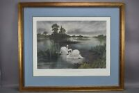 Lords Of The Mere Fred Miller Art Print Swans Swimming Pond Nature Landscape