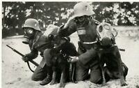 """WW 2 ++  Nachrichtentruppe (5) """"Meldehunde mit Führern unter Gasmaske"""""""