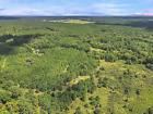VACANT LAND FOR SALE! .29 ACRE POLK COUNTY, TEXAS! TREES! DIRECT ROAD! ON POWER!