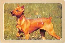 Pinscher Chien Dog Animau