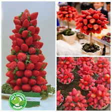 300 PCS Rare Strawberry Seeds Bonsai Tree Plants Delicious Edible Fruit Garden