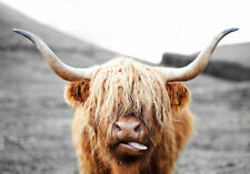Scottish Highland Cow Wildlife Nature Quality Canvas Print A3 Large