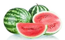 Very Delicious, Juicy And Healthy Watermelon 15-Finest Seeds / UK Seller