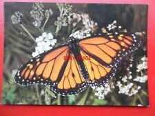 Butterfly Printed Collectable Animal Postcards