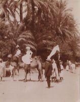 Argelia Camellos Foto Aficionado Francesa Colonialismo Francia Vintage Citrato