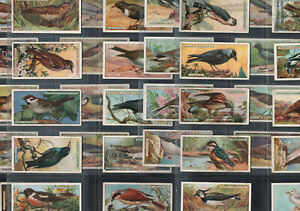 British Birds Rare Full 50 Card Push Out Set In Sleeves Ogdens Cigarettes 1923