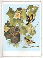 VINTAGE BIRD PRINT ~ BALTIMORE ORIOLE ~ JOHN JAMES AUDUBON