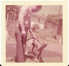 Pit Bull Vintage 1950's Photo Man Giving Tan Pit Bull Water from Hose