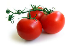 25 Premium Sweet Campari Tomato Seeds, Hand Picked From Organically Grown Plants