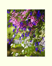 Flower pink and blue matted picture floral wall decor fine art  photography