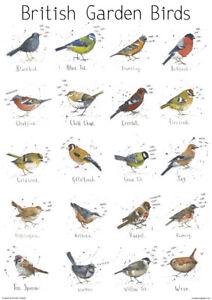 A3 VINTAGE BRITISH GARDEN BIRD POSTER NATURE WILDLIFE ART PRINT HOME DECOR GIFT