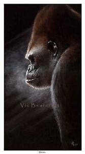 'Makaku', Limited Edition Gorilla Print, by Vic Bearcroft, BBC Wildlife Winner
