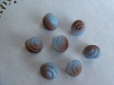 8 SWEET BLUE GLASS W/ BROWN REALISTIC SNAIL SEA SHELL VINTAGE BUTTONS CRAFT 11mm