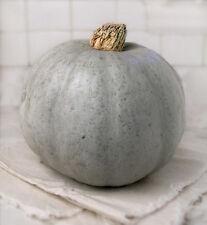 Pumpkin BLUE HOKKAIDO-Pumpkin Seeds-2 kg OF DELICIOUSNESS-20 FRESH SEEDS.