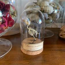 Cabinet de curiosités Oddities Globe squelette oiseau Dicaeum trochileum