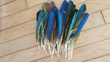 33 Medium Macaw Wing Feathers