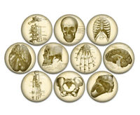 "Anatomy Skeletal 1"" Pin Back Buttons Badges Pins (Pack of 10)"