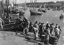 BR48906 Douarnenez arrivage de la sardine       France