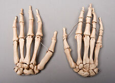 Halloween Horror Aged Skeleton Hands Life-Size Human Skeleton, Left & Right, NEW