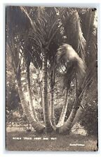 Vintage Postcard RPPC Seven Trees Rarotonga Cook Islands Sydney Hopkins D1