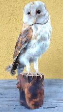 "Taxidermy Mounts Barn Owl Real Bird Mounted Stuffed Prey Stand Decor On Wood 12"""