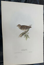 John Gould WOOD LARK Birds Of Europe. Lithograph 1832-37