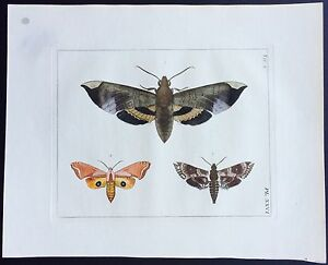VERY RARE 1773 DRURY Vol.2  SPHINX MOTHS Pl#26 HandColored Copper Plate XXVI