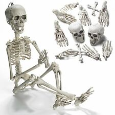 """19"""" Posable Skeleton with Movable/Posable Joints For Best Halloween Decoration"""