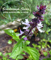 SCARBOROUGH SEEDS Cinnamon Basil 600 Seeds - Non GMO - Mosquito Repelling