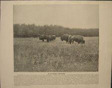 1898 PRINT + TEXT ~ SILVER HEIGHTS WINNIPEG