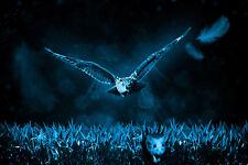 ANIMAL PHOTO BIRD OWL CHASING MOUSE GIANT POSTER WALL ART PRINT LLF0004
