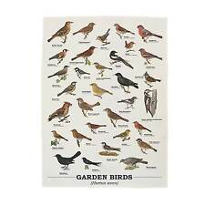Garden Birds Tea Towel from the Ecologie Hortus Aves Range by Gift Republic