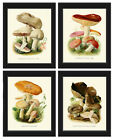 Unframed Mushroom Botanical Print Set of 4 Antique Vintage Wall Art Home Decor