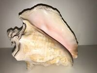 "Jumbo Large Conch Seashell with hole light pink 10"" nautical beach decor shell"