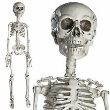 "30"" Full Body Halloween Skeleton with Movable Joints for Halloween Decoration"