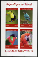 Chad 2019 MNH Tropical Birds 4v IMPF M/S II Oiseaux Macaws Parrots Bird Stamps