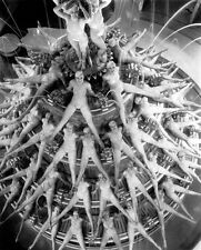 "Production Photo, Busby Berkeley, ""Footlight Parade"" 1933, large 13x19"""