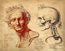 Vintage Anatomy Medical Painting Human Face Muscles Skull Real Canvas Art Print