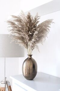 Dried pampas grass family large grey brown 10pc tall reed bunch 70cm dry flower