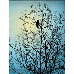 Raven Tree Silhouette Large Wall Art Print 18X24 In